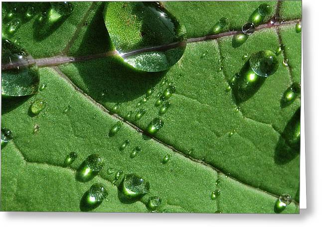 Waterdrops Greeting Cards - Water and Light Greeting Card by Marilynne Bull