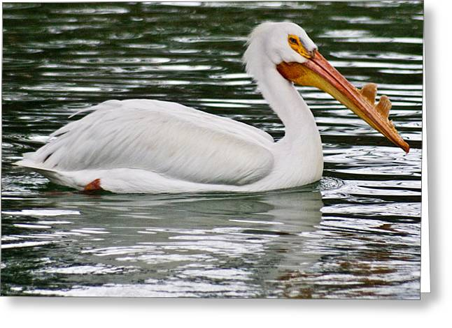 Water Fowl Greeting Cards - Water Bird with Notches Greeting Card by Douglas Barnett