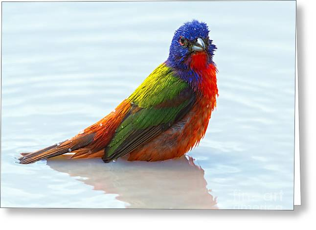 Reflecting Water Greeting Cards - Water Colors Greeting Card by Gary Holmes
