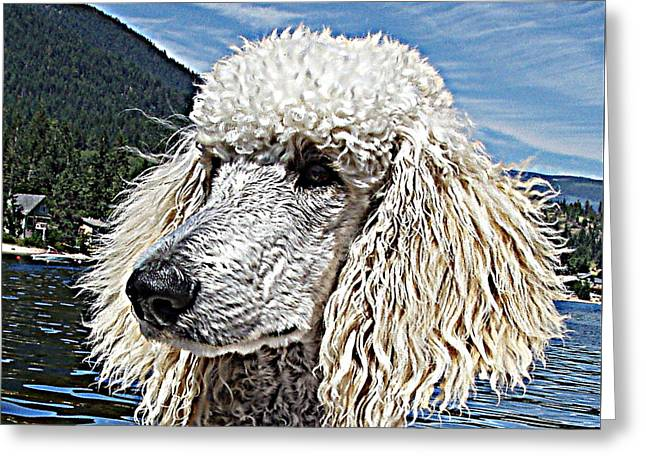 Water Dog Greeting Card by Joey Nash