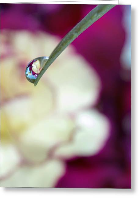Moyers Greeting Cards - Water drop reflections of beauty Greeting Card by Dana Moyer