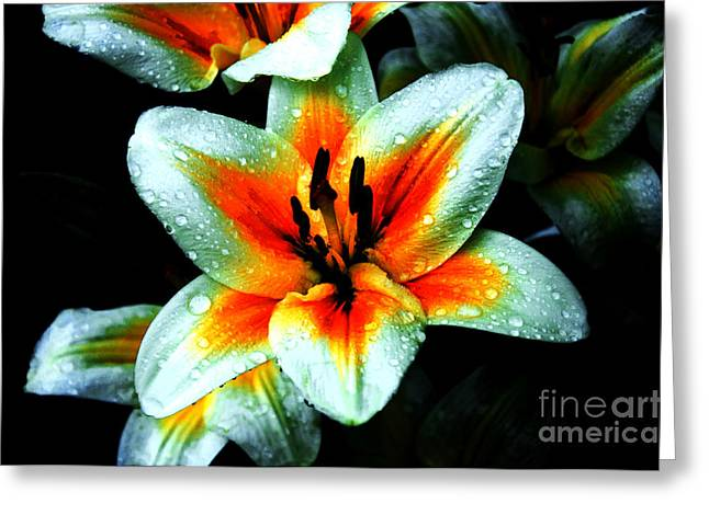 Dew Covered Flower Greeting Cards - Water Droplet Covered White Lily  Greeting Card by Andee Design