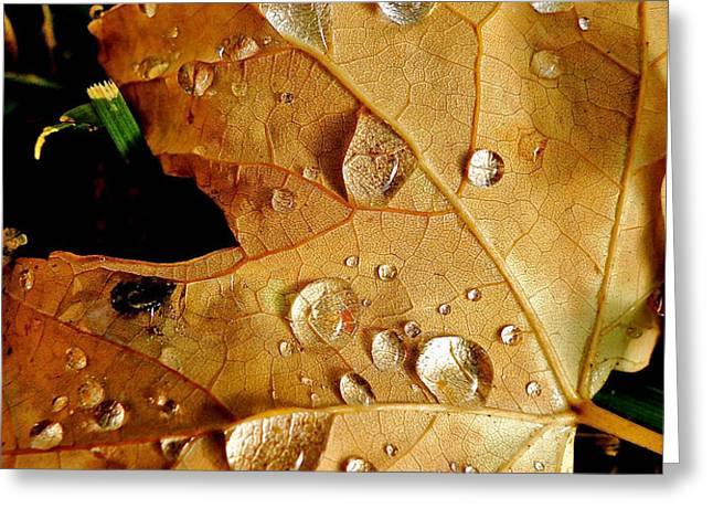 Water Drops Greeting Card by Liz Vernand