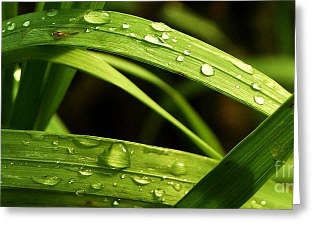 Water Drops Greeting Card by Mario Brenes Simon