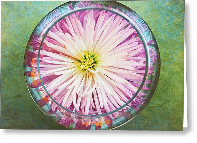 Water Flower Greeting Card by Scott Norris