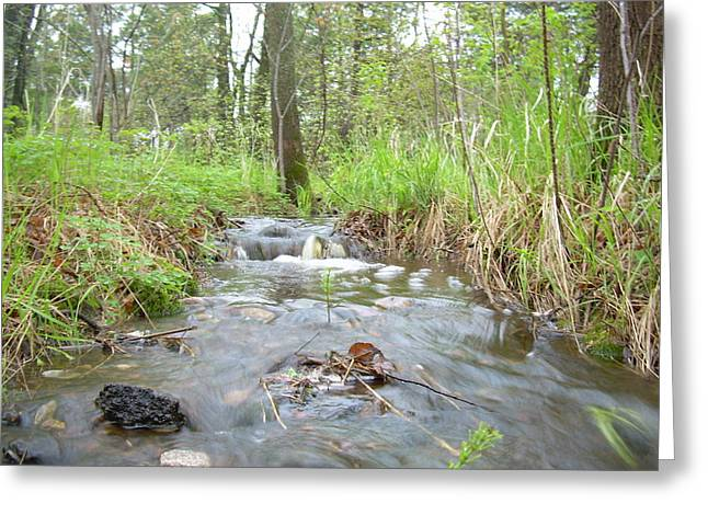Stream Pyrography Greeting Cards - Water flows after a May rain Greeting Card by Kent Lorentzen