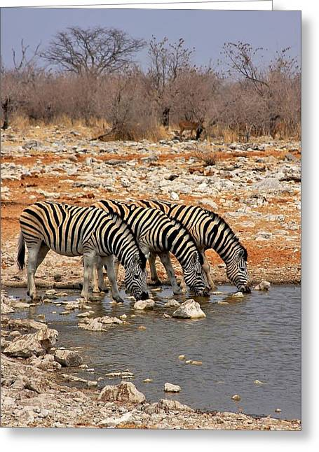 Water Hole Social Greeting Card by Stacie Gary