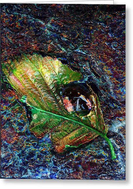 Kd Greeting Cards - Water Leaf Greeting Card by Kd Neeley