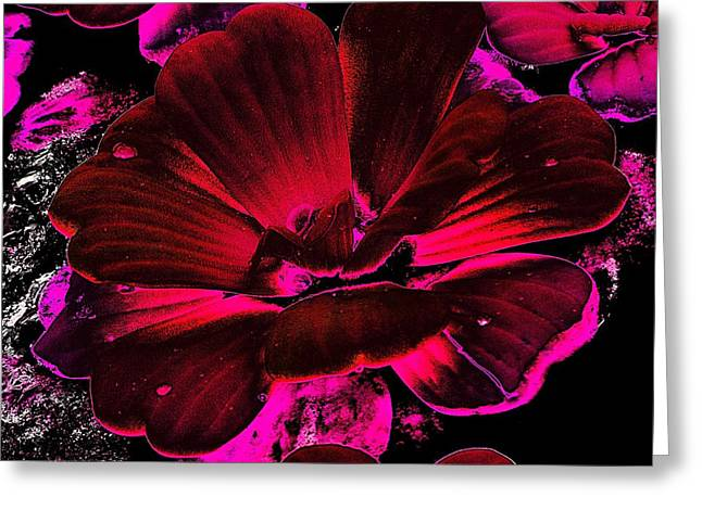 Aquatic Greeting Cards - Water Lettuce #07 Greeting Card by Ninie AG