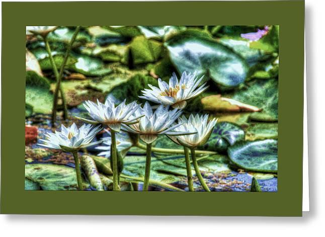 Aquatic Greeting Cards - Water Lilies 10 Greeting Card by Allen Beatty