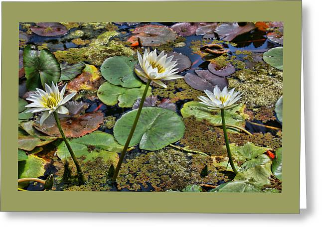 Lilly Pads Greeting Cards - Water Lilies 11 Greeting Card by Allen Beatty