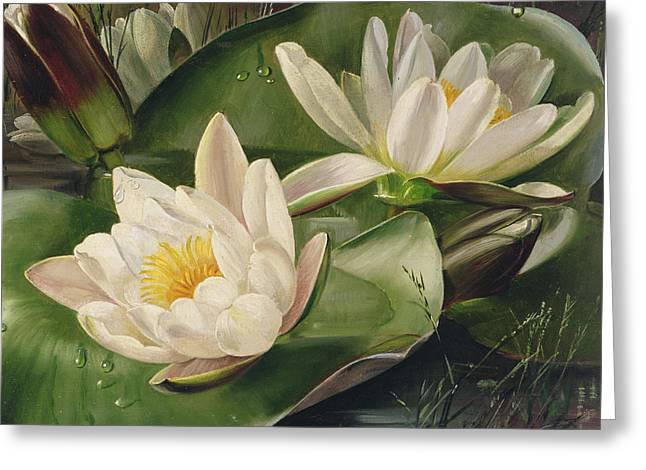 Beauty In Nature Paintings Greeting Cards - Water Lilies Greeting Card by Albert Williams