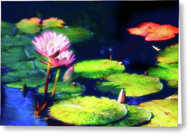 Water Garden Photographs Greeting Cards - Water Lilies Greeting Card by Harry Spitz