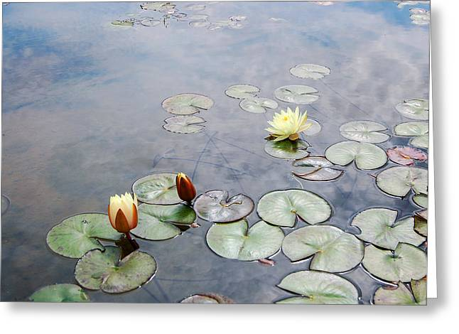 Water Garden Greeting Cards - Water Lilies Monet Style Greeting Card by Marion McCristall