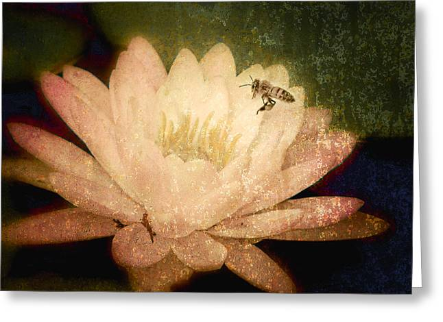Water Lilly Greeting Cards - Water Lilly and Bee Greeting Card by Jerri Moon Cantone