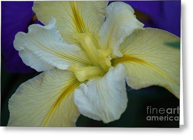 Water Lilly Greeting Card by Merrin Jeff