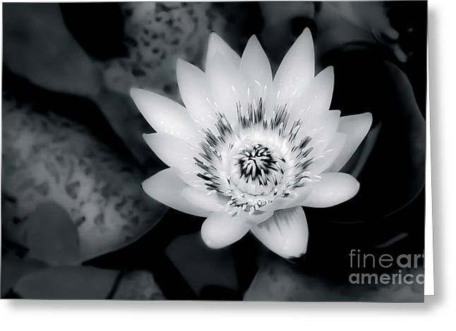 Water Lilly Greeting Cards - Water Lilly Enhanced Greeting Card by Ken Andersen