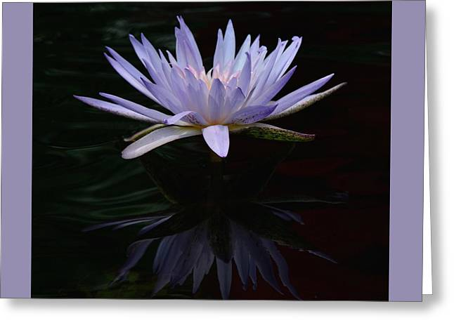 Day Lilly Greeting Cards - Water Lilly Reflection Greeting Card by Vickie Courville