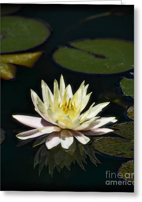 Water Lilly Greeting Cards - Water Lilly  Greeting Card by Saija  Lehtonen