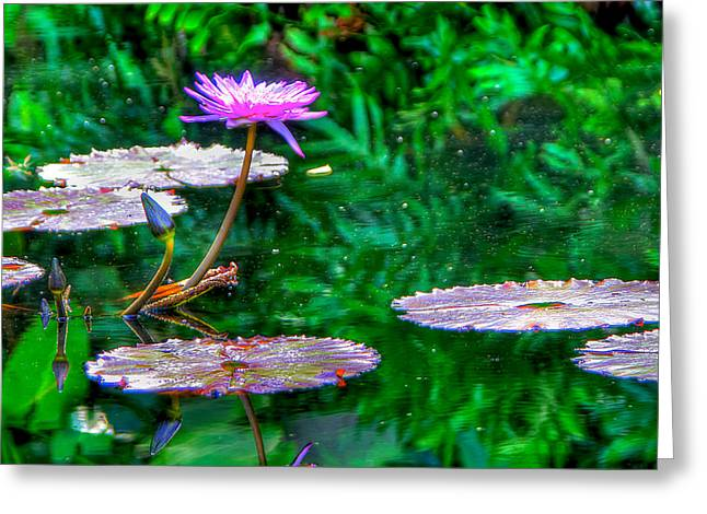 Water Lilly Greeting Cards - Water Lilly Greeting Card by William Wetmore