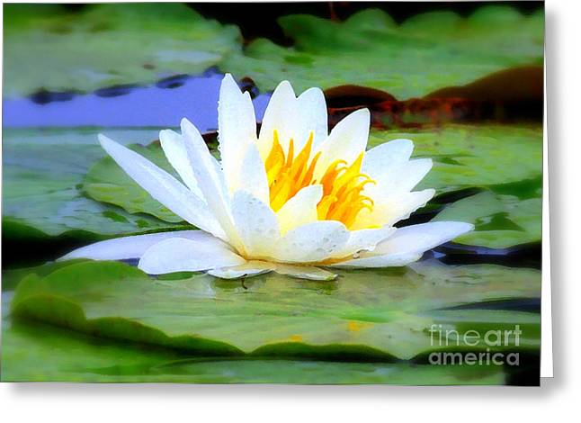 Florida Flowers Greeting Cards - Water Lily - Digital Painting Greeting Card by Carol Groenen