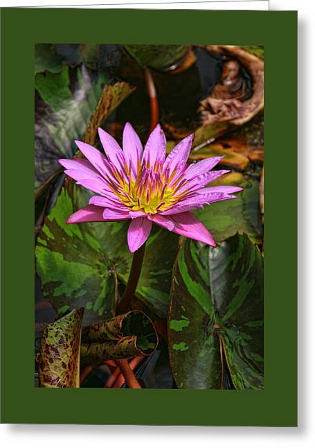 Water Lilly Greeting Cards - Water Lily 29 Greeting Card by Allen Beatty