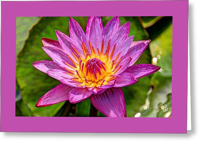 Water Lilly Greeting Cards - Water Lily 34 Greeting Card by Allen Beatty