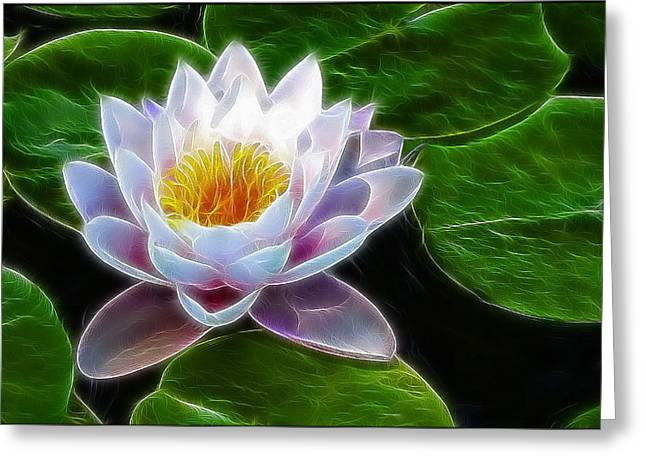 Nenuphar Greeting Cards - Water Lily Greeting Card by Alexey Bazhan