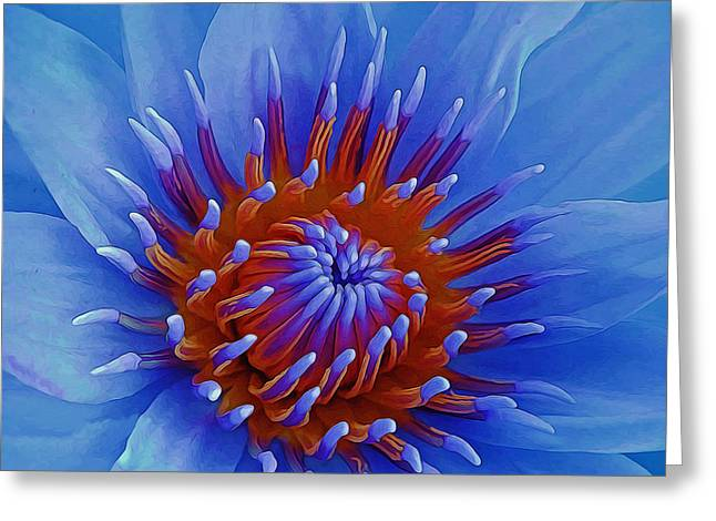 Nature Center Greeting Cards - Water Lily Center Greeting Card by Pamela Walton