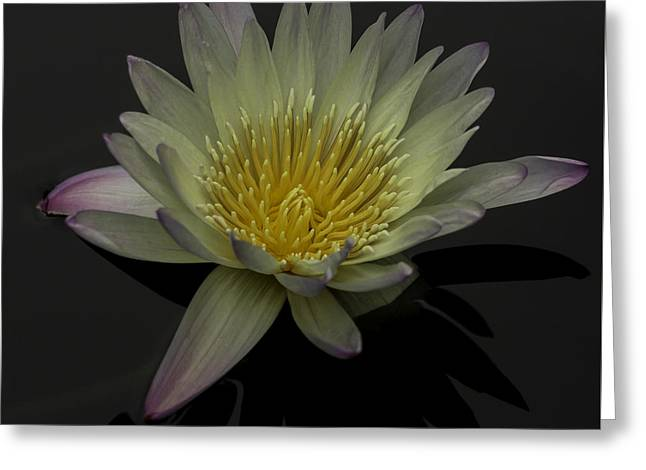 Aquatic Greeting Cards - Water Lily Flower Greeting Card by Greg Thiemeyer