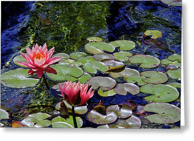 Lilly Pads Greeting Cards - Water Lily Garden Greeting Card by Marie Hicks