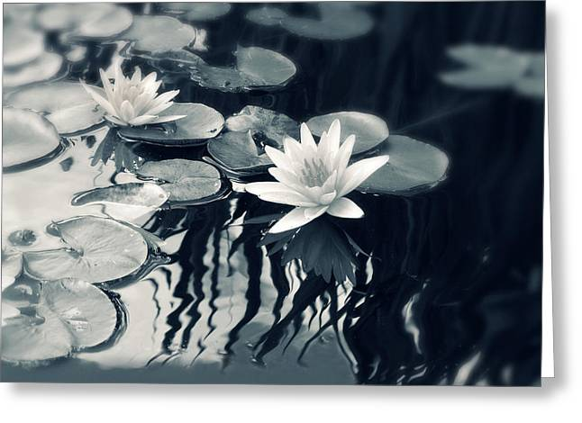 White Lily Greeting Cards - Water Lily Greeting Card by Jessica Jenney