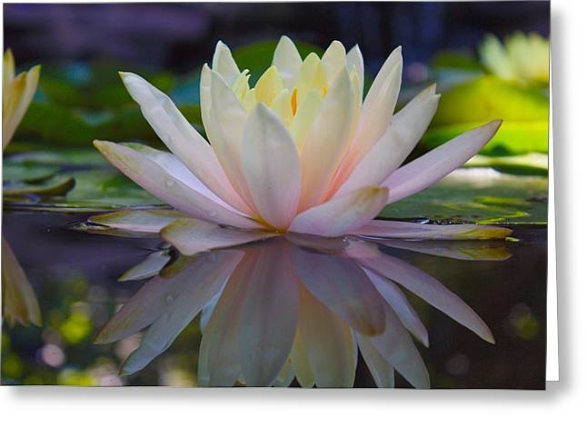 Print Photographs Greeting Cards - Water Lily Reflection Greeting Card by Brian Hamilton