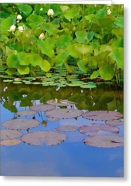 Asheville Nc Greeting Cards - Water Lily Sky Greeting Card by Nada Frazier