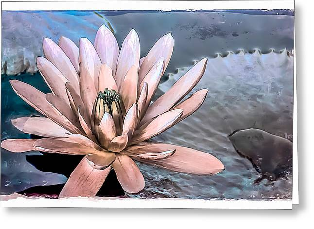 Aquatic Greeting Cards - Water Lily Vintage Art Greeting Card by Julie Palencia