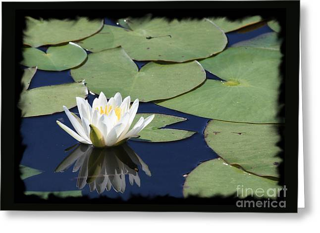 Water Lily With Black Border Greeting Card by Carol Groenen