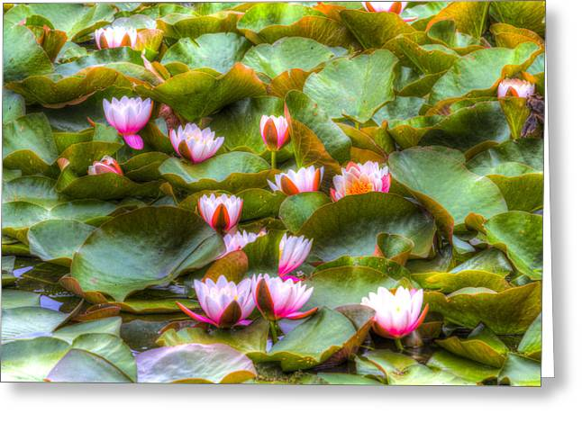 S Lily Greeting Cards - Water Lilys Greeting Card by David Pyatt