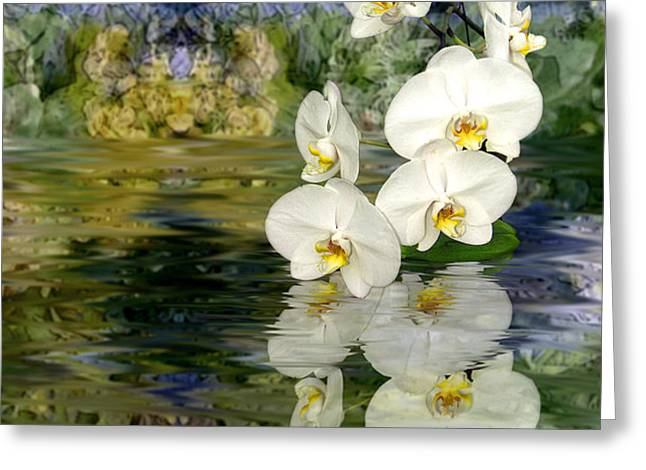 Water Orchid Greeting Card by Tom Romeo