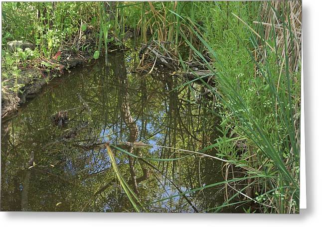 The Trees Greeting Cards - Water Pond Reflection in Peters Canyon Greeting Card by Linda Brody