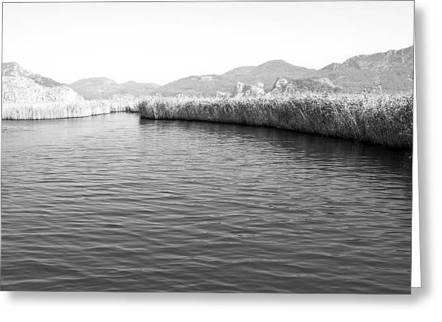 Water Scene In B And W Greeting Card by Svetlana Sewell