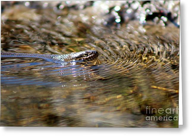 Snakes In Art Greeting Cards - Water Snake on Little River  Greeting Card by Neal  Eslinger