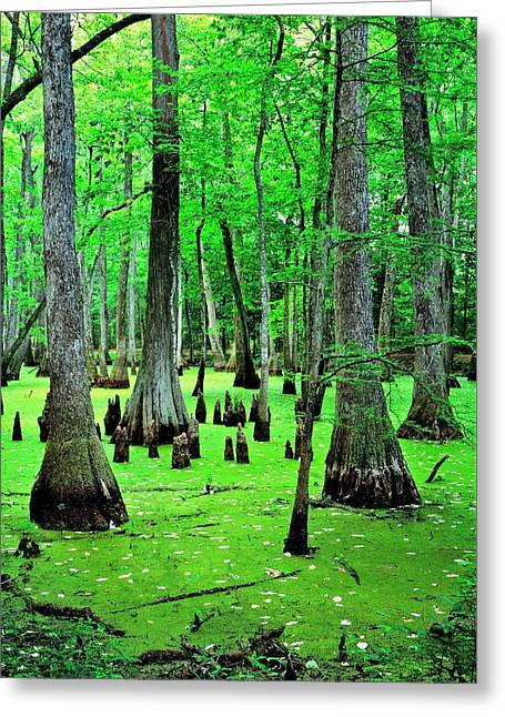 Water Tupelo And Bald Cypress Trees On The Natchez Trace Parkway. Jackson, Mississippi, Usa Greeting Card by David Lyons