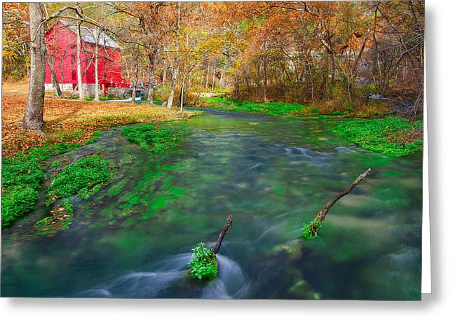 Watercress At Alley Spring  Greeting Card by Jackie Novak