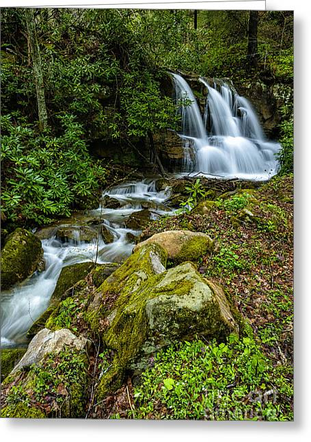 West Fork Greeting Cards - Waterfall along Back Fork of Elk River Greeting Card by Thomas R Fletcher