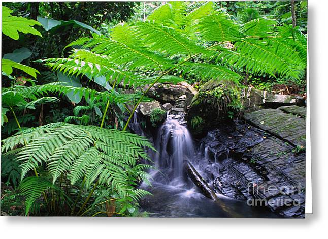 Puerto Rico Greeting Cards - Waterfall and Tree Fern Greeting Card by Thomas R Fletcher
