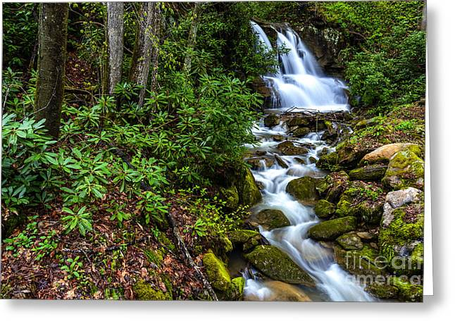 West Fork Greeting Cards - Waterfall Back Fork of Elk River Greeting Card by Thomas R Fletcher