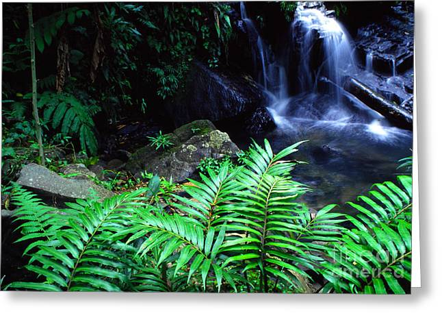 Yunque Greeting Cards - Waterfall El Yunque National Forest Greeting Card by Thomas R Fletcher