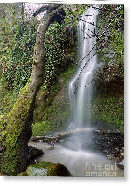 Oregon Waterfalls Greeting Cards - Waterfall Troutdale Oregon Greeting Card by Dustin K Ryan