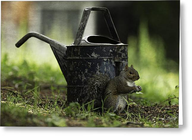 Watering Can Greeting Cards - Watering Can Greeting Card by Everet Regal