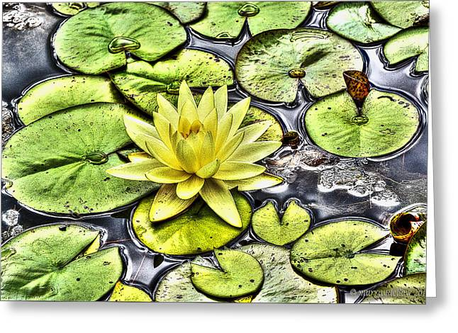 Coastal Maine Greeting Cards - Waterlily Pond Greeting Card by Murray Dellow